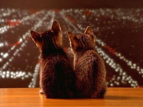 gatos-gatitos-crias-12