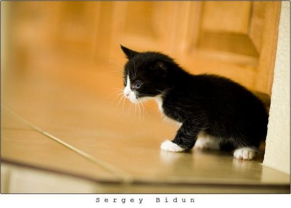 gatos-gatitos-crias-13