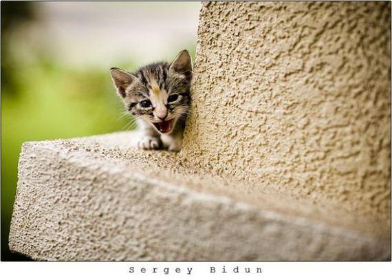 gatos-gatitos-crias-14