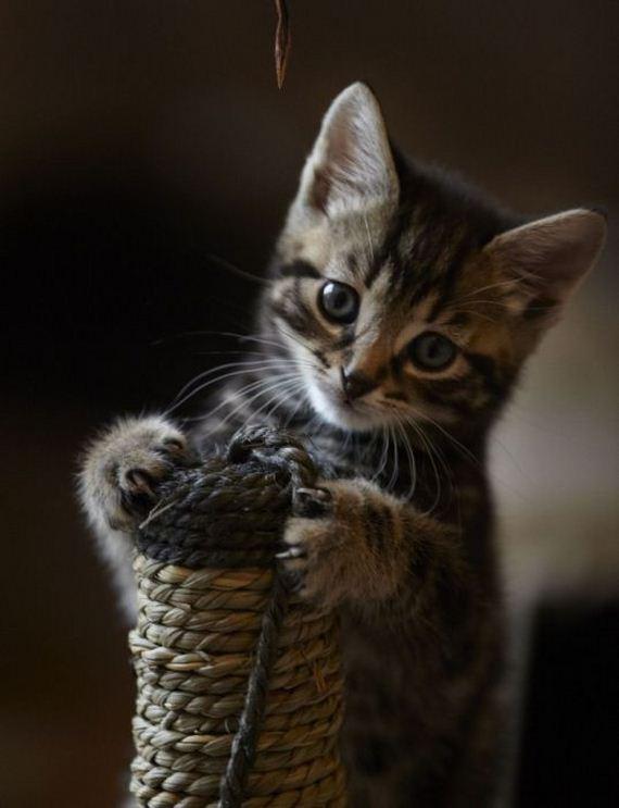 gatos-gatitos-crias-17