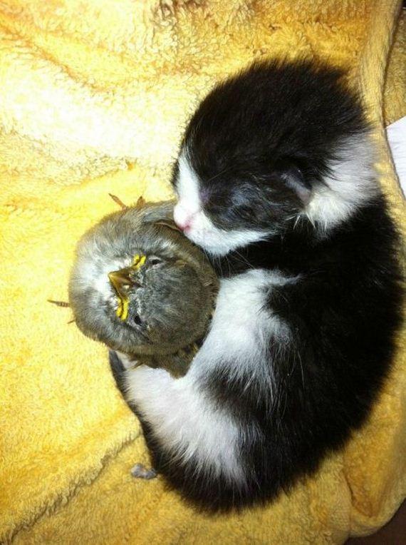 gatos-gatitos-crias-18