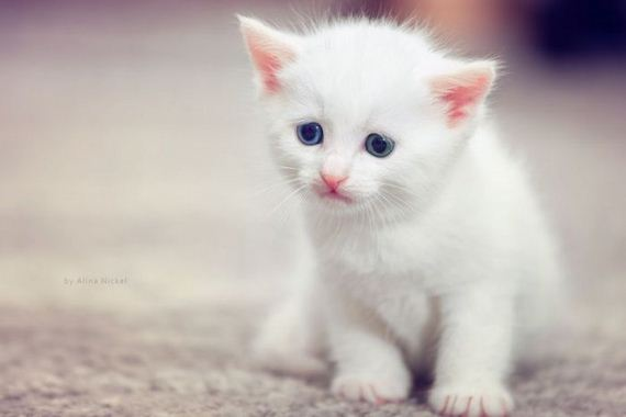 gatos-gatitos-crias-20