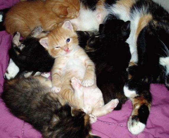 gatos-gatitos-crias-24