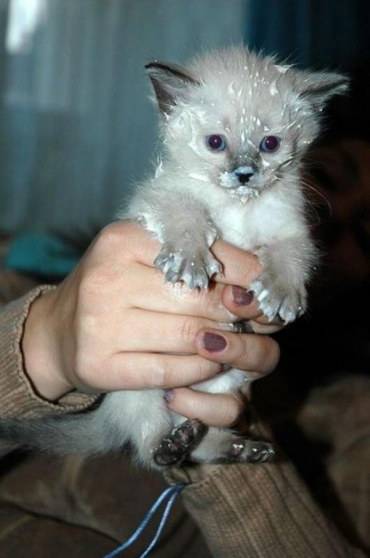 gatos-gatitos-crias-25