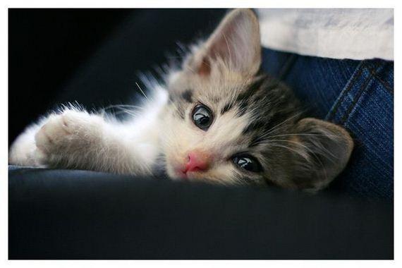 gatos-gatitos-crias-26