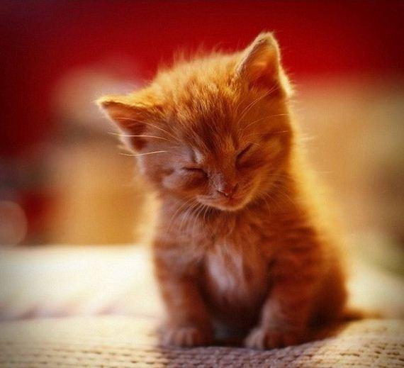 gatos-gatitos-crias-28