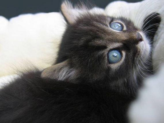 gatos-gatitos-crias-29