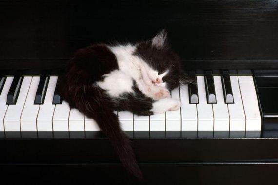 gatos-gatitos-crias-31