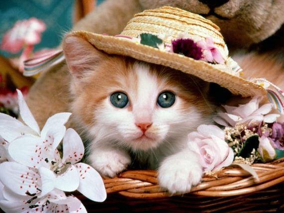 gatos-gatitos-crias-34