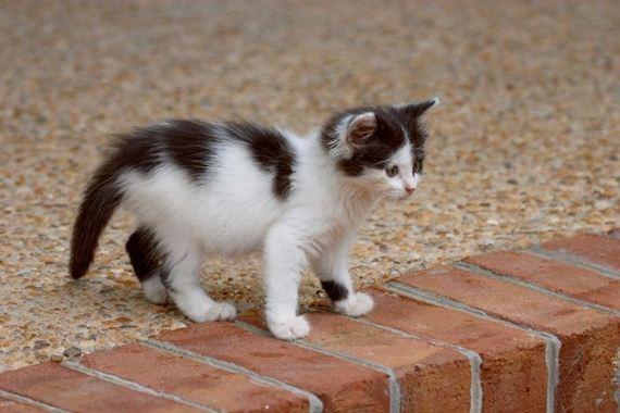 gatos-gatitos-crias-36