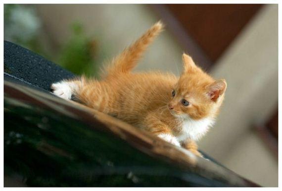 gatos-gatitos-crias-37