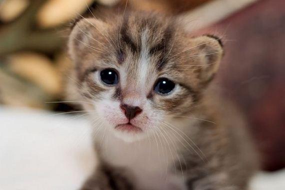 gatos-gatitos-crias-38