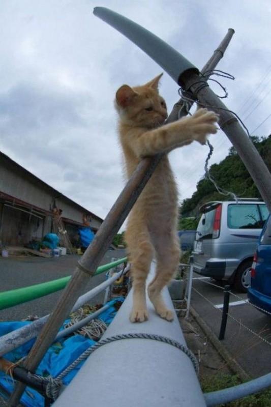 gatos-gatitos-crias-40