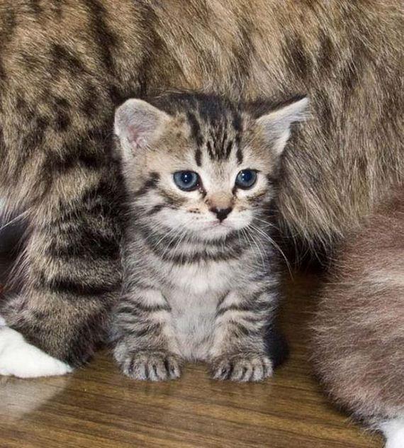 gatos-gatitos-crias-42