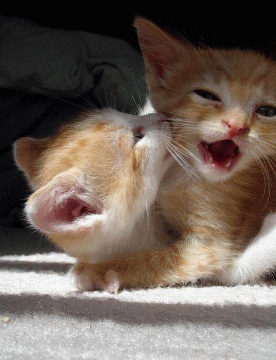 gatos-gatitos-crias-44