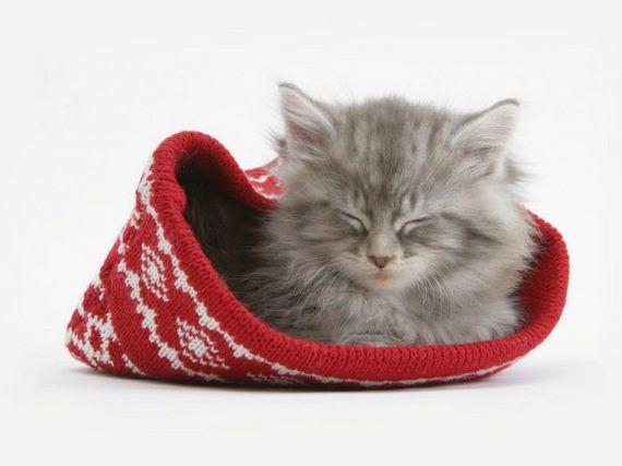 gatos-gatitos-crias-45