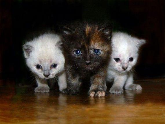 gatos-gatitos-crias-47