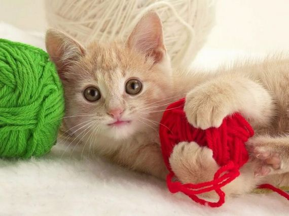 gatos-gatitos-crias-49