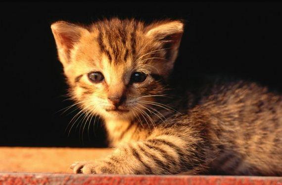 gatos-gatitos-crias-50
