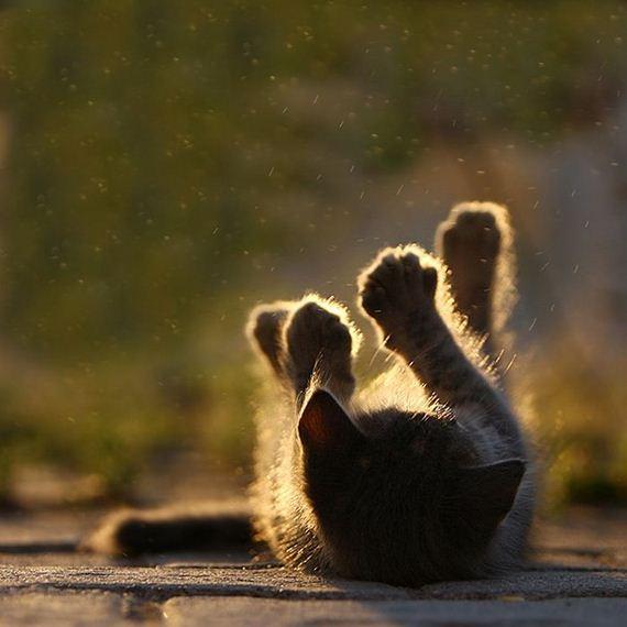 gatos-gatitos-crias-53