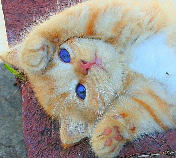 gatos-gatitos-crias-55