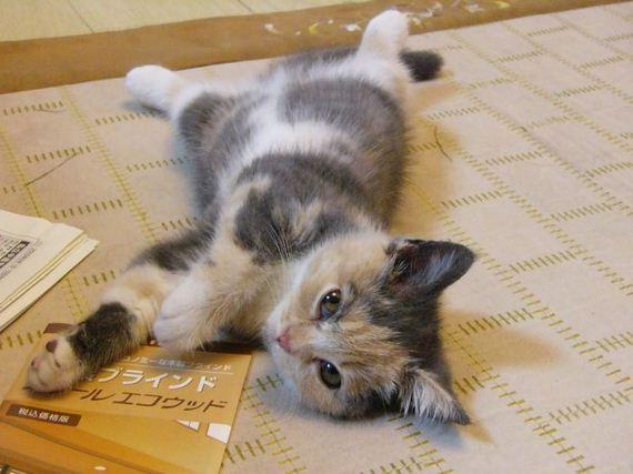 gatos-gatitos-crias-57