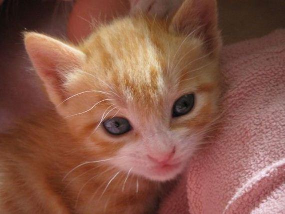 gatos-gatitos-crias-59