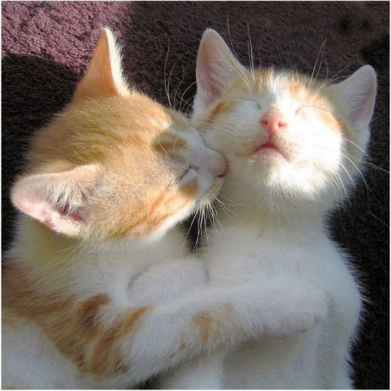 gatos-gatitos-crias-60
