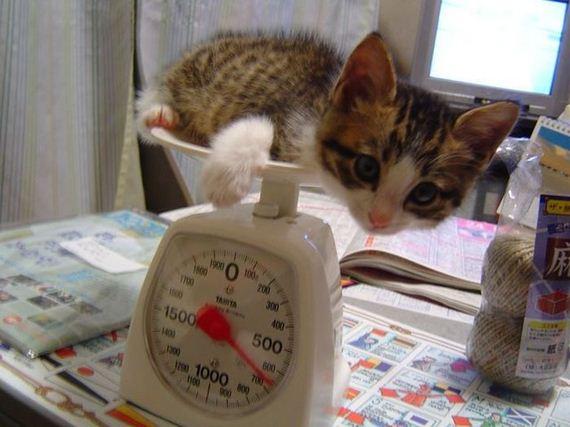 gatos-gatitos-crias-63