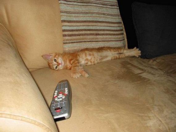 gatos-gatitos-crias-64