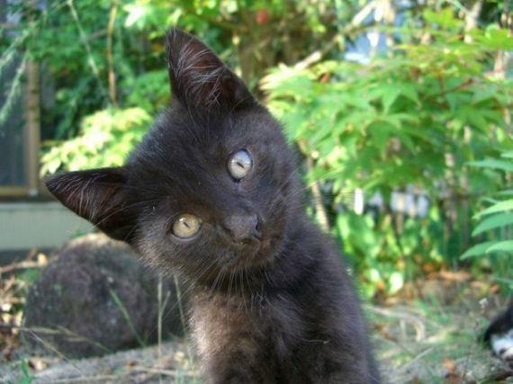 gatos-gatitos-crias-65