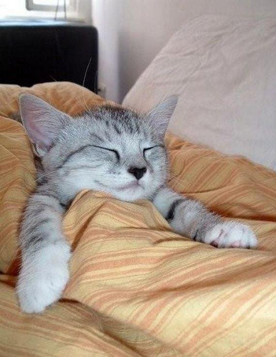 gatos-gatitos-crias-72