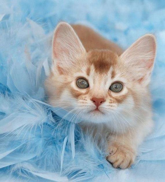 gatos-gatitos-crias-73