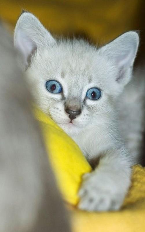 gatos-gatitos-crias-78