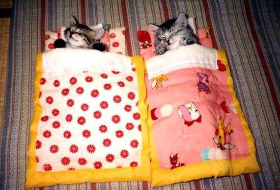 gatos-gatitos-crias-83