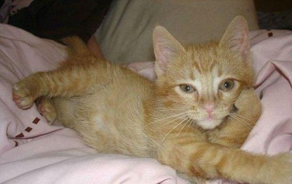 gatos-gatitos-crias-84