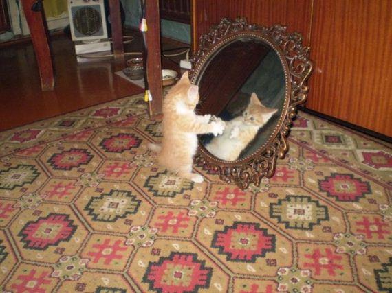 gatos-gatitos-crias-86