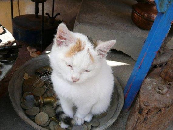 gatos-gatitos-crias-87