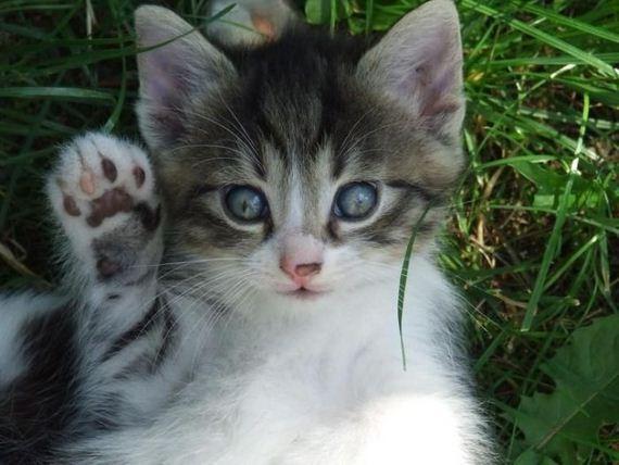 gatos-gatitos-crias-88