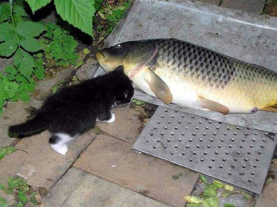 gatos-gatitos-crias-89