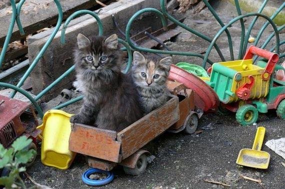 gatos-gatitos-crias-90