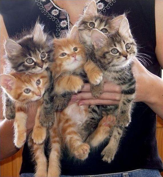 gatos-gatitos-crias-91