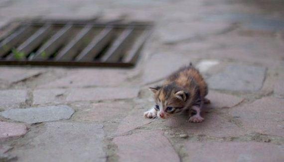 gatos-gatitos-crias-92