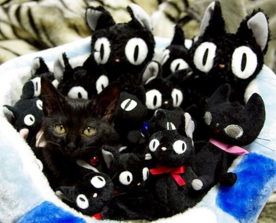 gatos-gatitos-crias-95