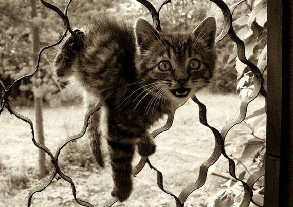 gatos-gatitos-crias-96
