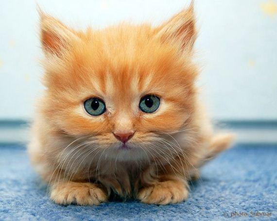 gatos-gatitos-crias-98