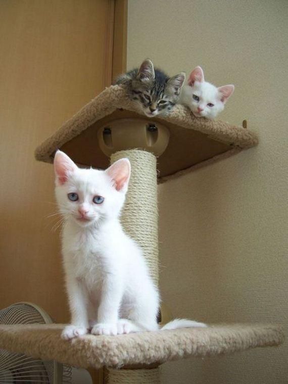 gatos-gatitos-crias-99
