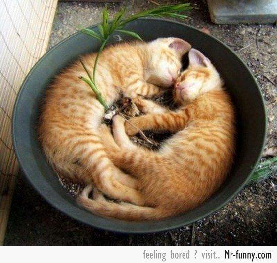 gatos-siesta-1
