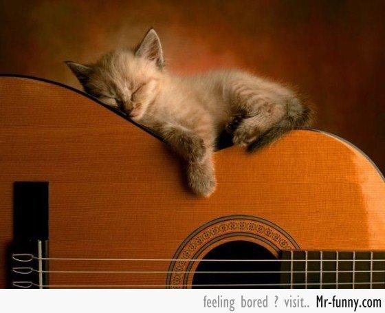 gatos-siesta-5