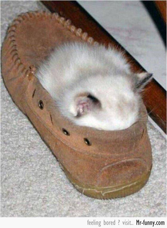 gatos-siesta-6